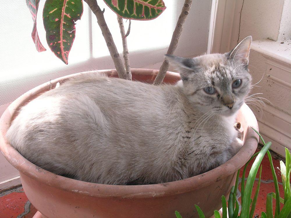 Какие запахи не переносит кот