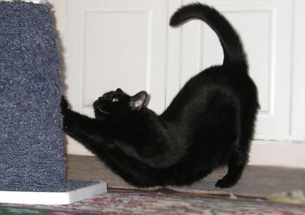 Как сделать что бы кот не метил
