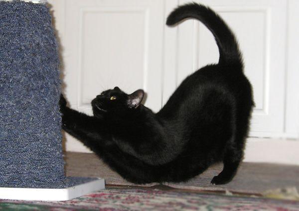 Кот или кошка метит территорию