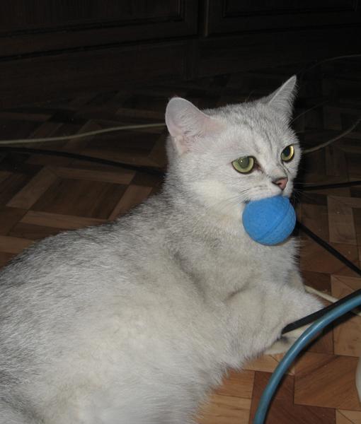 Демодекоз у кошек: лечение 65