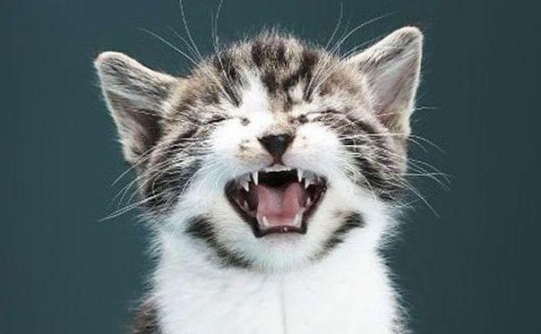 Кот мяучит утром