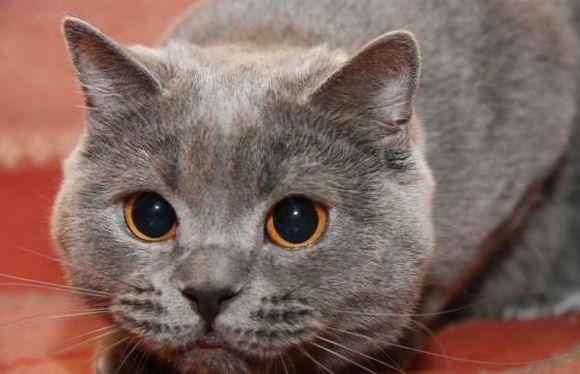 Кот долго смотрит в глаза