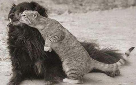 Собака обижает кота
