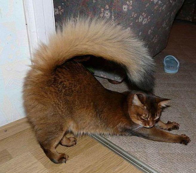 Завести котенка если в доме уже есть кот