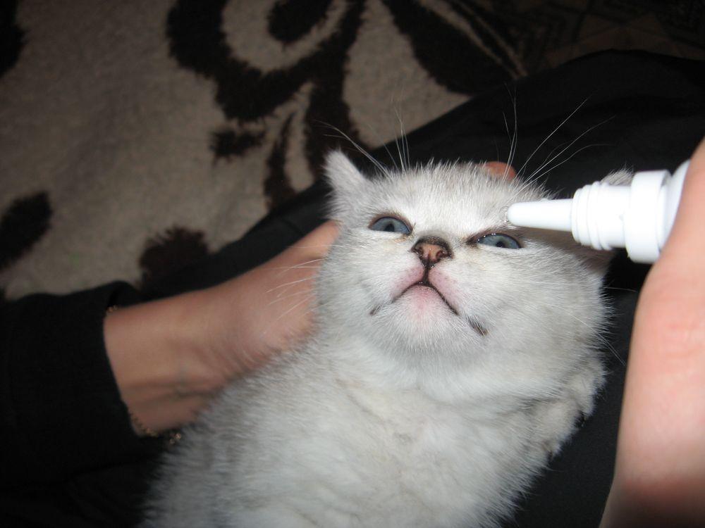 У кота постоянно слезятся глаза