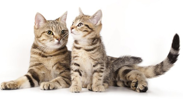 кошек и котят картинки