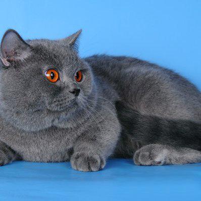 лучшие препараты от глистов для котят