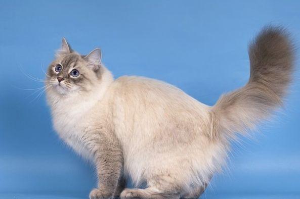 Как помочь выжить кошкам зимой  Форум Пес и Кот