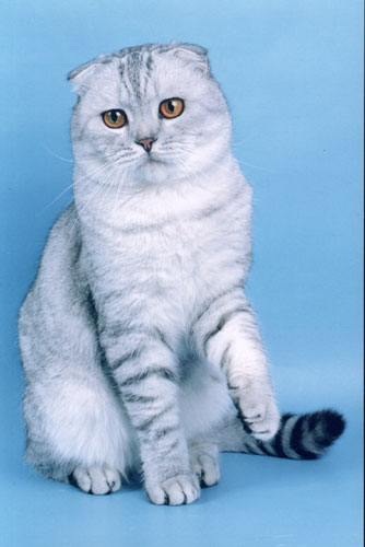 фото кошка вискас