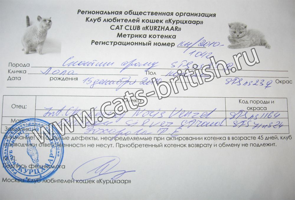 Клуб любителей кошек курцхаар москва официальный сайт эротическое шоу конкурс