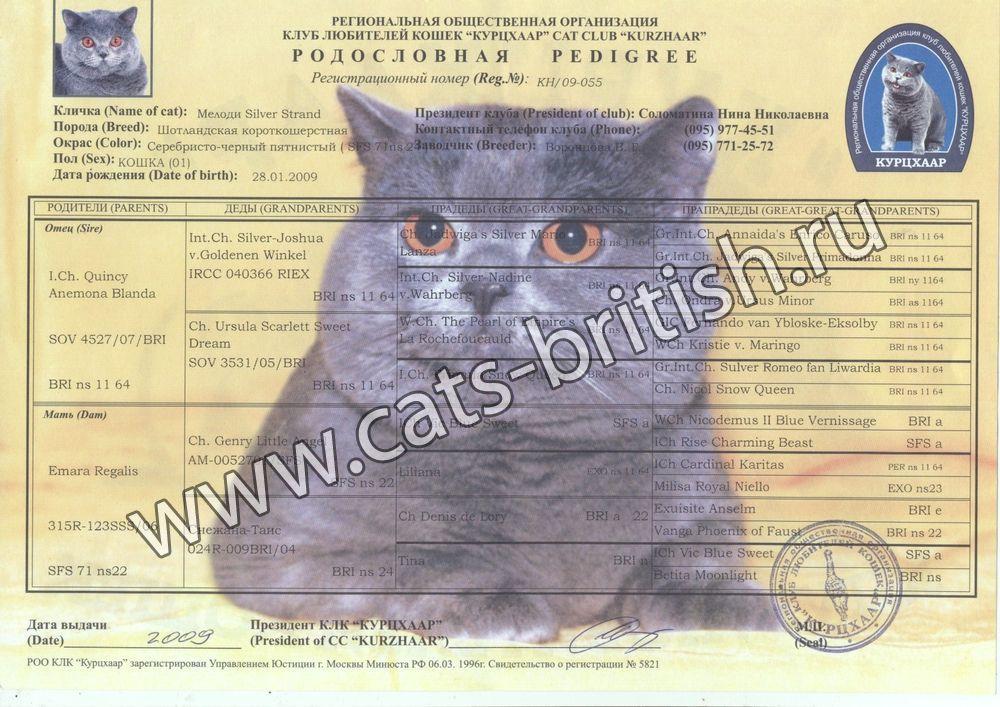 Паспорт о родословной для кота