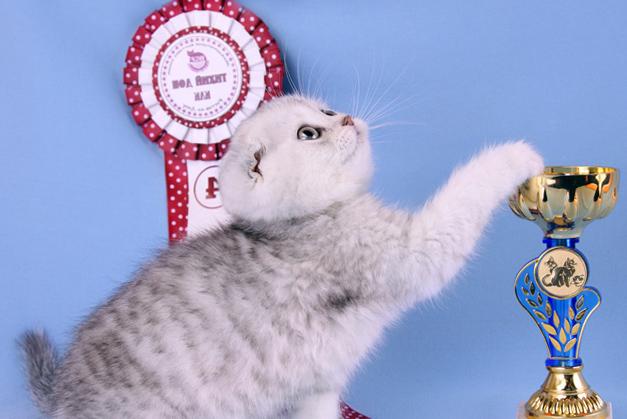 Клуб шотландских кошек в москве фильм о стриптиз клубе