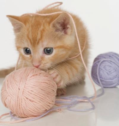 Игры для котенка своими руками