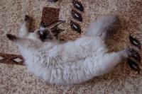 кошка метит углы
