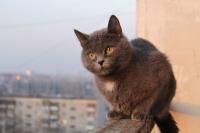 кошка после падения с высоты