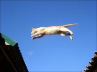 падение котов