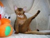 кошка много ест и не толстеет