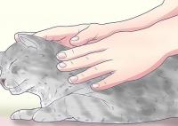 массаж для кошек