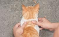 массаж коту