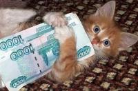 цена котенка