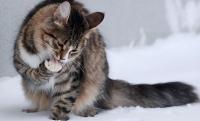 примета кошка умывается
