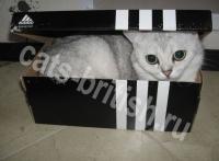 фото кота в коробке