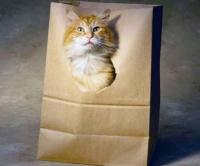 кошка в коробке-пакете