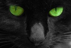 кошка смотрит в глаза