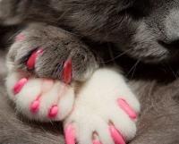 накладки на когти кошке