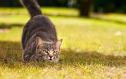 история происхождения кошек