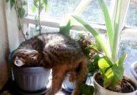 почему кошка ест цветы