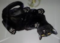 бомбейская кошка вес