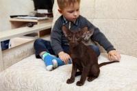 ориентальная кошка и дети