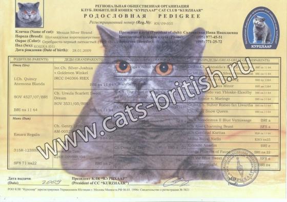 родословная кошки