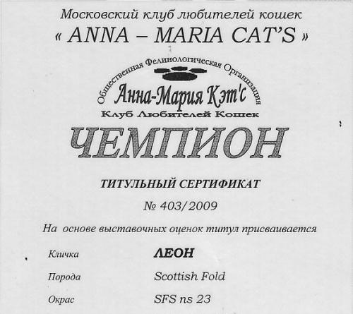 чемпионский сертификат шотландского кота