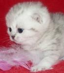 наша кошка в детстве
