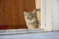 Котенок один дома