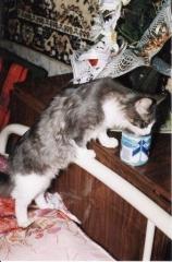 невоспитанный кот